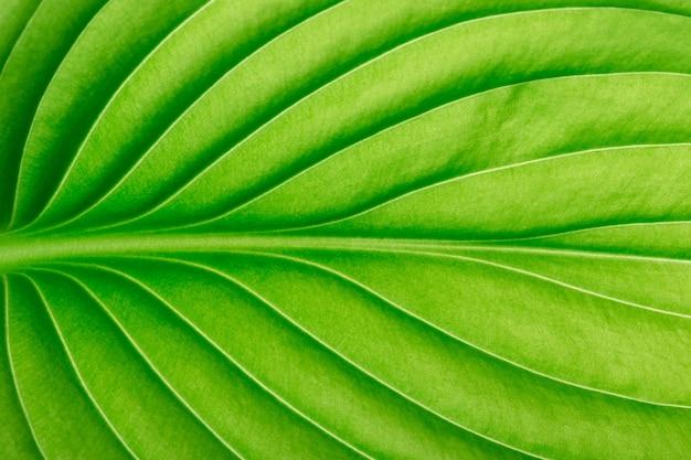 배경으로 녹색 잎의 질감