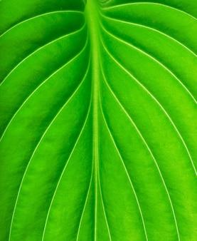 Текстура зеленого листа как фон