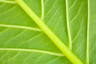 Texture of a green leaf of a plant close up