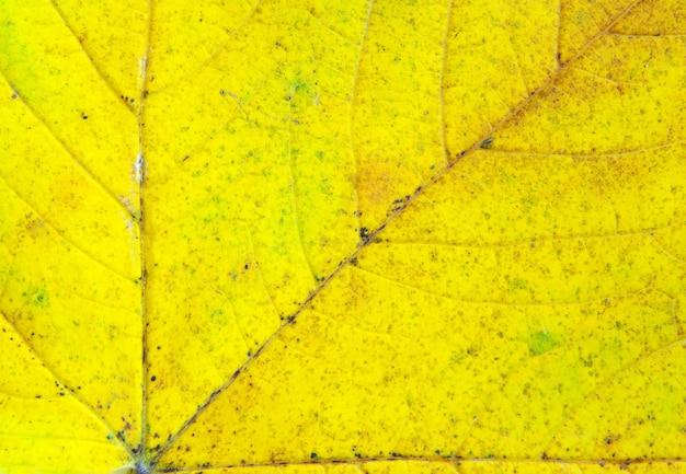 배경으로 단풍 잎의 질감