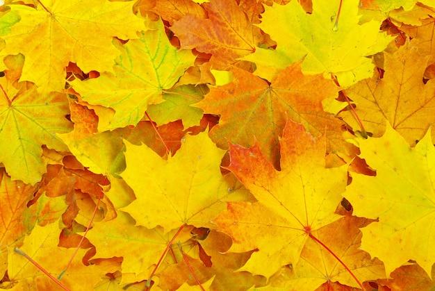 배경으로 단풍잎의 질감