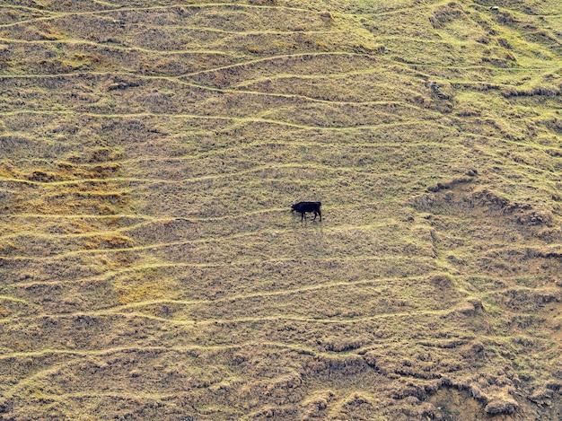山の斜面の質感。放牧牛のいる急な山の斜面。緑の高原の牧草地。マウンテンテラス。