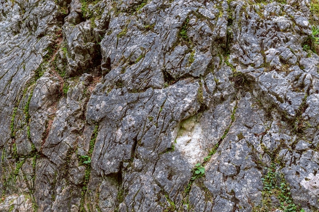 숲에서 이끼로 자란 돌의 질감