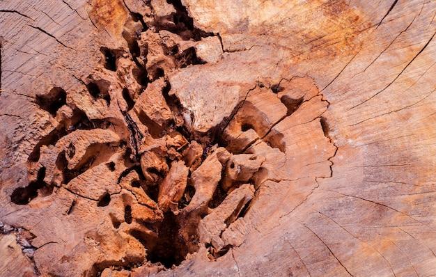 昆虫に甘やかされて育った古い木の切り株の質感