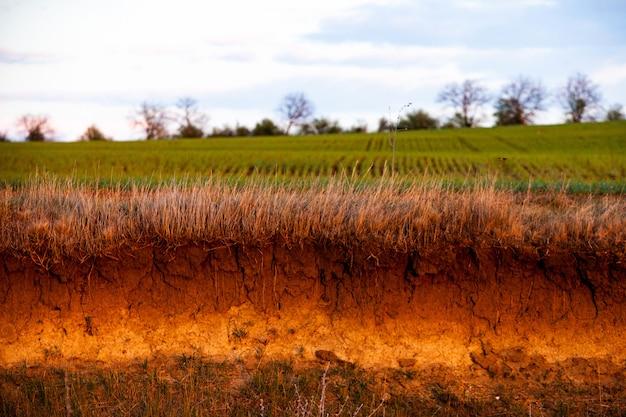 茶色の農地のテクスチャ。土性の背景。