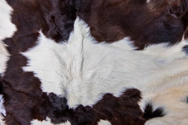 모피 검정 흰색과 갈색 반점이 있는 갈색 암소 피부 코트의 질감