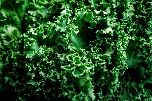 곱슬 케일 녹색 양배추 클로즈업의 질감입니다. 채식주의자와 건강한 식생활을 위한 슈퍼 푸드 케일 샐러드 잎
