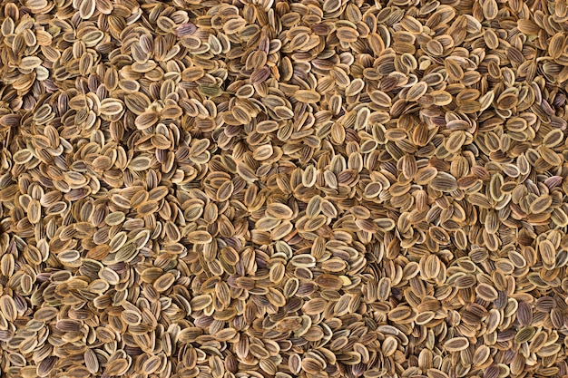 Текстура семян укропа крупным планом, специи или приправы в качестве фона