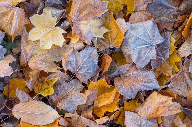 Текстура сухих осенних листьев, покрытых инеем
