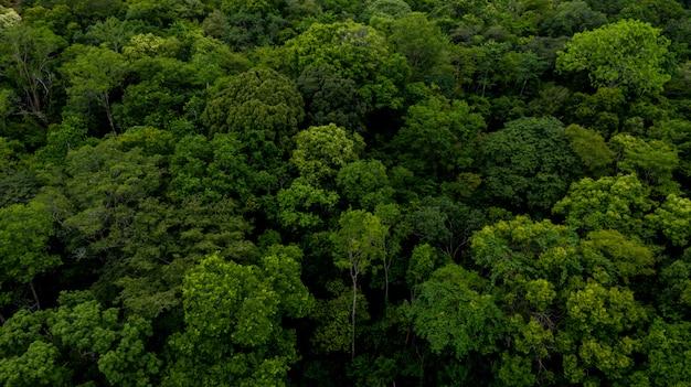 森の背景のテクスチャ