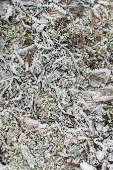 初冬または晩秋の庭の地面の質感。凍るような草、棒と葉の背景