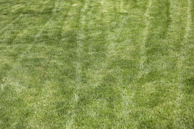 위에서 본 잔디의 질감
