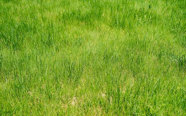 緑の芝生のフィールドの背景のテクスチャ。緑の草のテクスチャの背景、緑の芝生、背景の裏庭、草のテクスチャ、緑の芝生、公園の芝生のテクスチャ