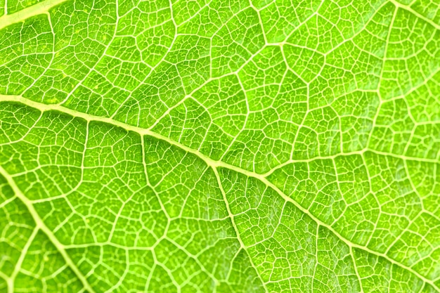 緑の葉のテクスチャ、クローズアップ