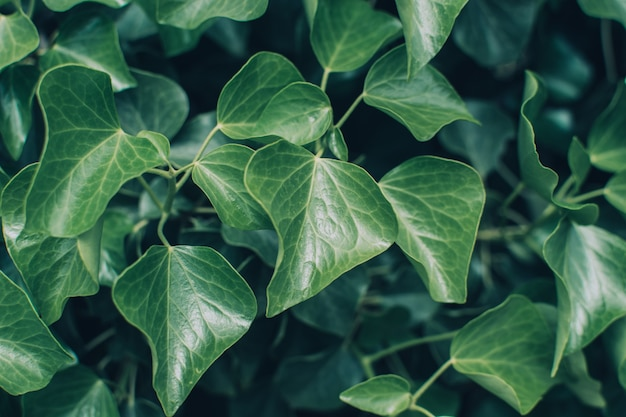 熱帯植物の多くの新鮮な緑の葉の質感。自然な熱帯の背景。