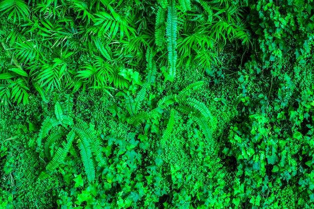 熱帯の緑の植物の多くの新鮮な葉の質感。