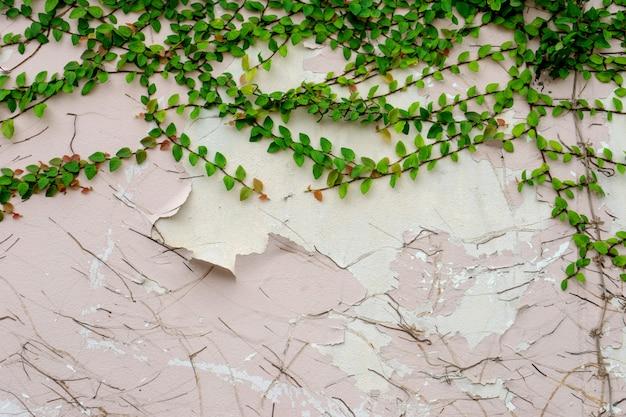 Текстура старой гранж стены