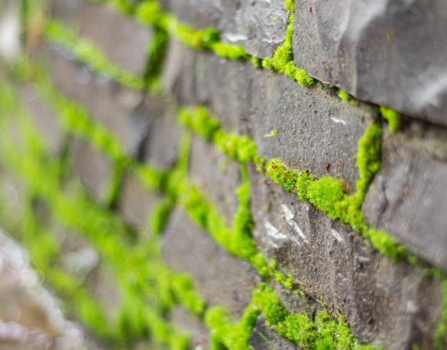 오래 된 돌 담의 질감 덮여 녹색 이끼