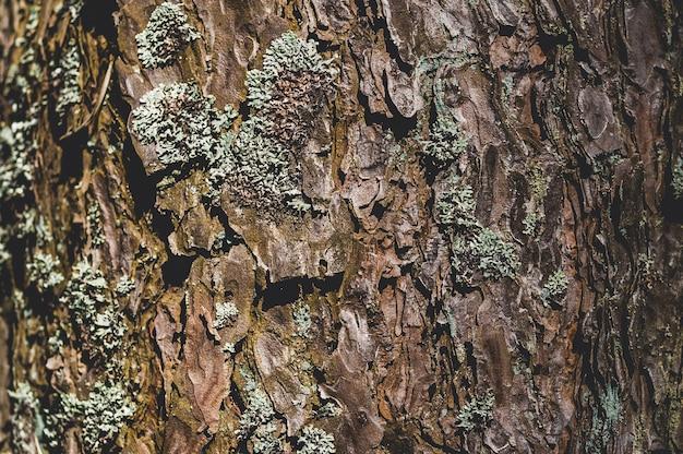 苔と松樹皮の質感