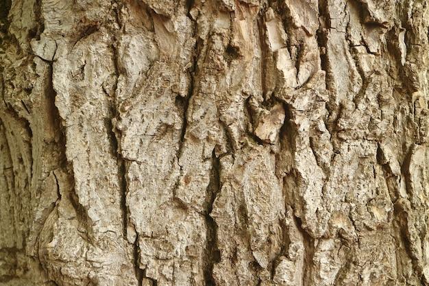 背景の粗い木の樹皮のテクスチャ