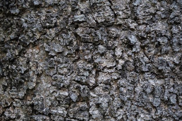 大まかな木の皮の表面のテクスチャ。背景の大まかな木肌表面のクローズアップのテクスチャ