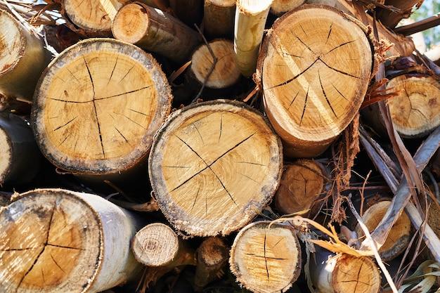 森で切り取られた積み上げ丸太の質感。森林破壊の概念。バックグラウンド。
