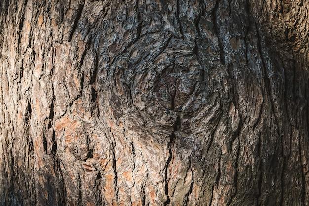松の木の樹皮の質感