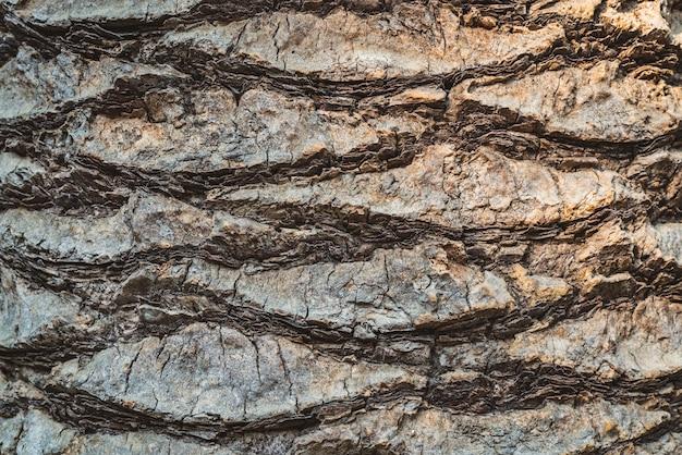 熱帯のヤシの樹皮の質感
