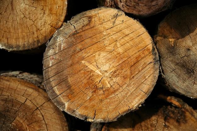 Фактура хвойного леса складчатая, вырубка деревьев, дрова.
