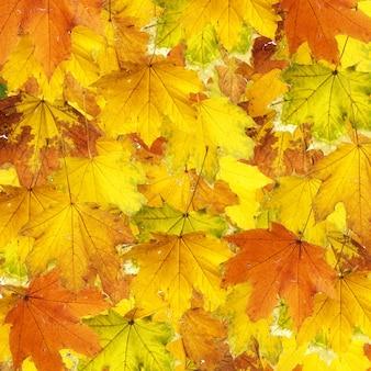 Текстура сушеных листьев клена