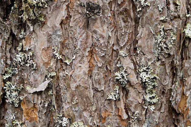 松樹皮の背景の北欧の松樹皮の自然な構造のテクスチャ