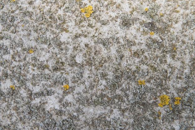風化したコンクリート表面のテクスチャ