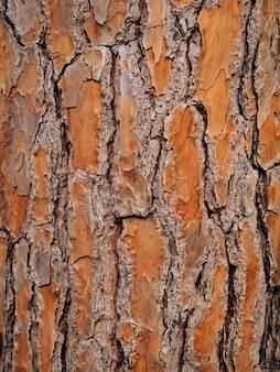 숲에서 나무 껍질의 질감