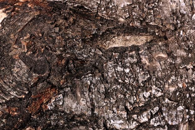 木の樹皮の自然な背景のテクスチャ