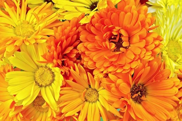 キンセンカの黄色とオレンジ色の花の質感