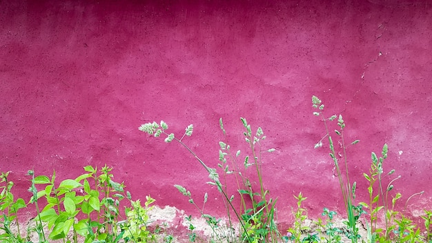 Texture of an old clay facade of a house painted in purple. ukrainian old house.