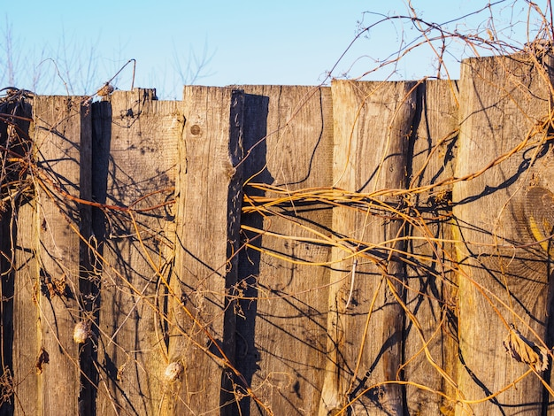 The texture of the old fence with dried wild cucumbers