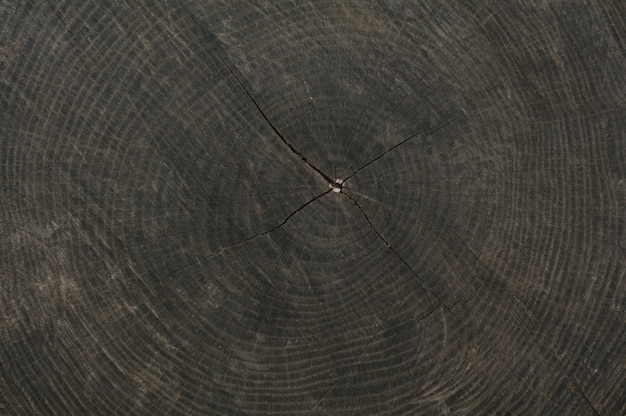 Texture of the old stump