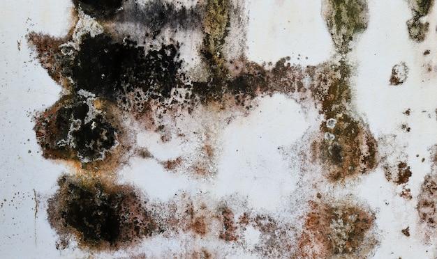 ヴィンテージの背景のための黒い汚れと古い白い漆喰壁のテクスチャ