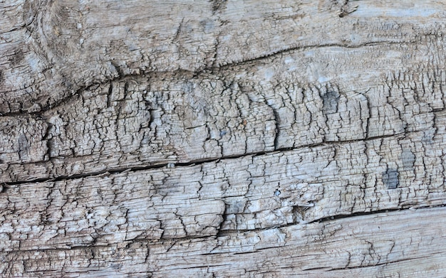 Texture of the old wooden beams