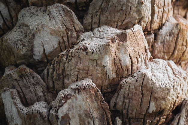 Texture of palm bark.macro extreme close up.