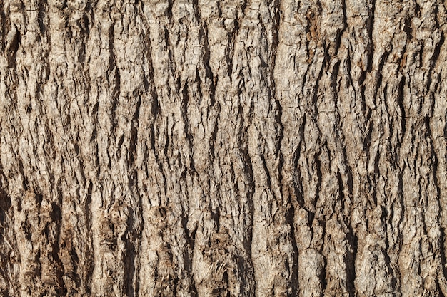 Texture of palm tree bark.