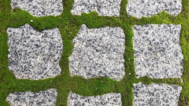 The texture of the paved tile of the street. concrete paving slabs. paving slabs. grass between the slabs. texture of paving slabs overgrown with grass. background image of a stratum stone.