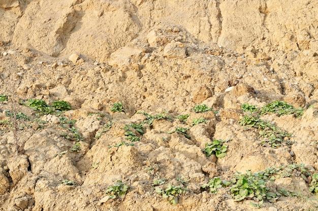 텍스처는 식물과 토양을 보았다.