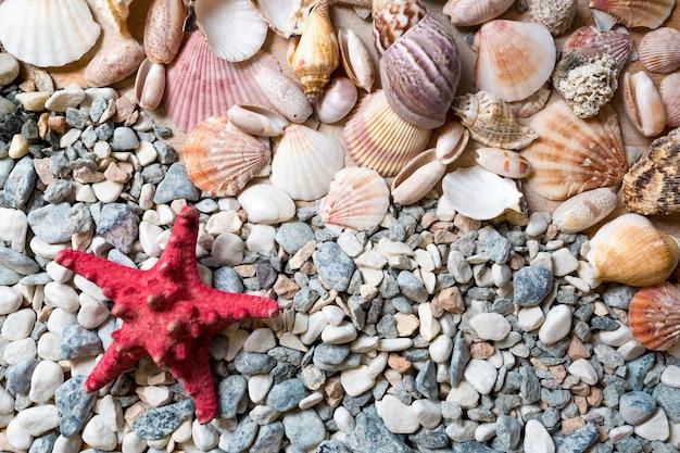 Texture of seashells and red starfish lying on seashore