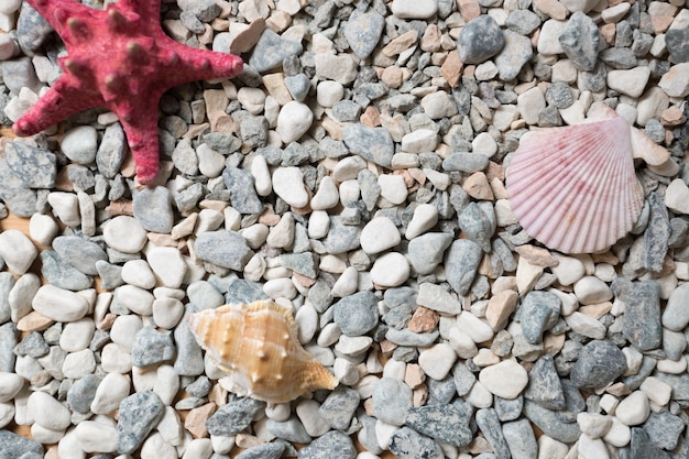 Texture of seashore covered by colorful pebbles, seashells and starfishes