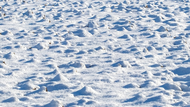 Texture of snow covering the grass in sunny weather