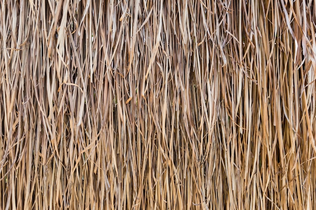 Texture of thatched