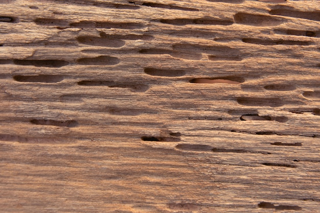 Texture of traces of termites eat wood