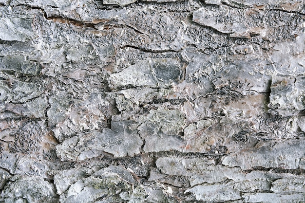Texture of tree bark treated with white insect paint